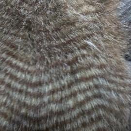 Мех искусственный Песец птичка коричневая (метр )